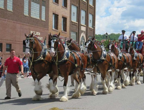 All Hail The Famous Clydesdales